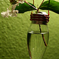How To Make a Lightbulb Vase